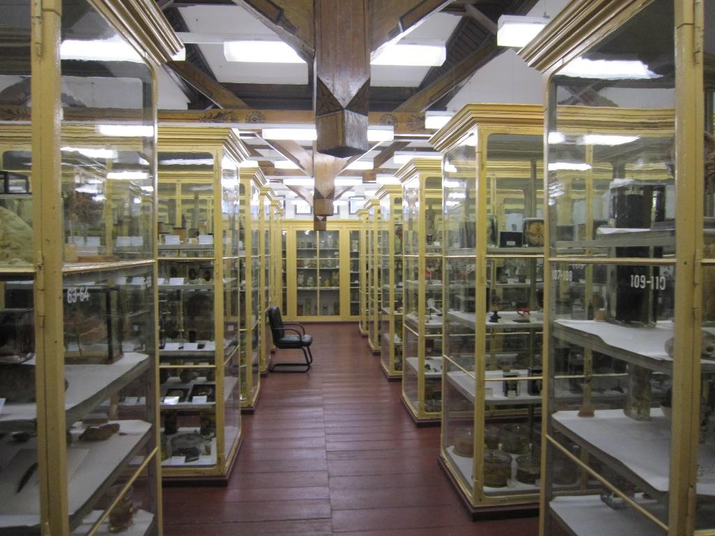 Meckelsche Sammlungen