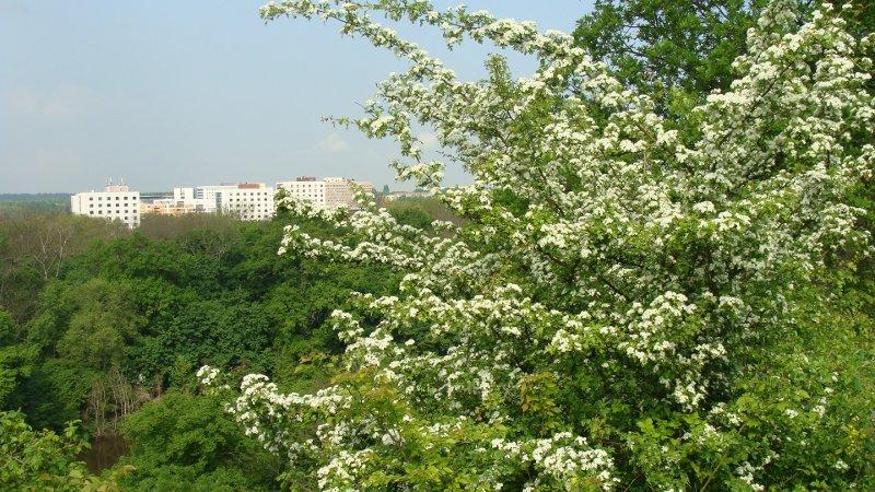 Park in Halle: Blick Richtung Kröllwitz/ Weinberg-Campus