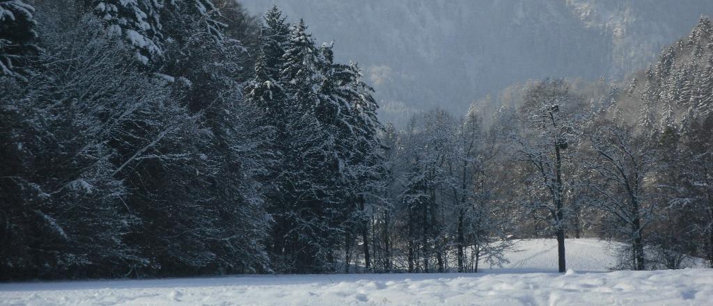 Weihnachten mit Livingtools und Geschenkvorschlägen - Winterlandschaft