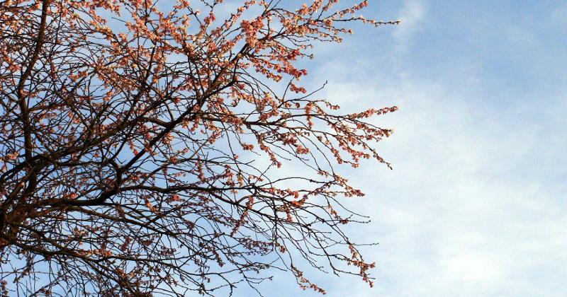 Frühling im Winter in Halle